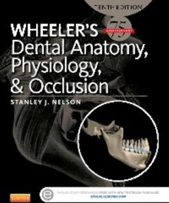 Test Bank for (Ch01-16) Wheeler's Dental Anatomy Physiology and Occlusion 10th Edition Ash